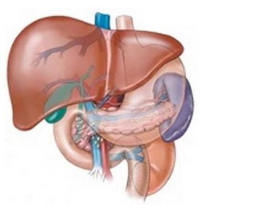 不用动手术的肝脏清洗法